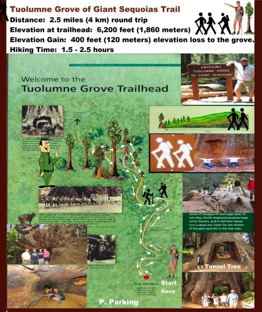 Tuolumne Grove of Giant Sequoias Map Hiking Trail