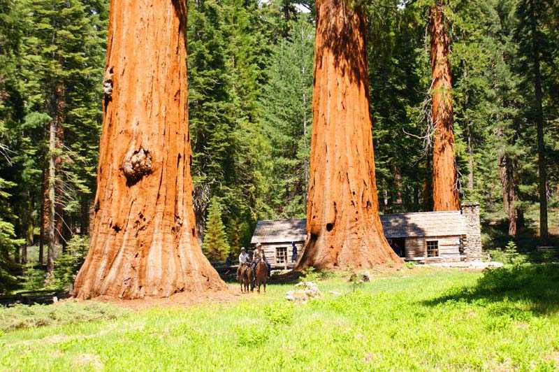 Walk to Mariposa Grove of Giant Sequoia Trees in Yosemite Park