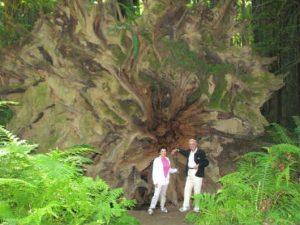 visit redwood state parks