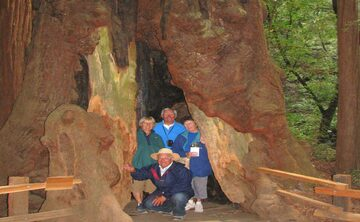 Coastal Redwoods versus the Giant Sequoias